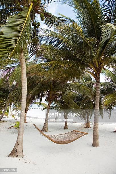 Hammock hanging between palm trees
