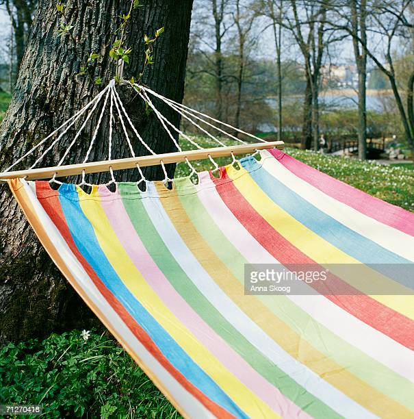 A hammock in a tree.