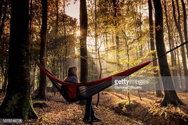 hammock in the woods - nordic countries stock pictures, royalty-free photos & images