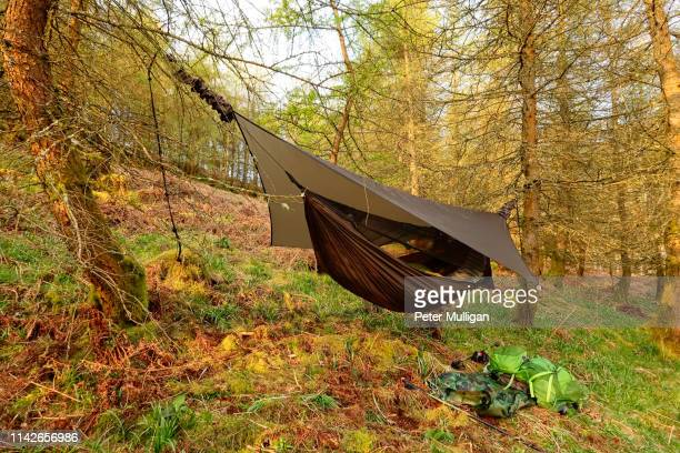 hammock on a hillside in the forest, english lake district - 防水シート ストックフォトと画像