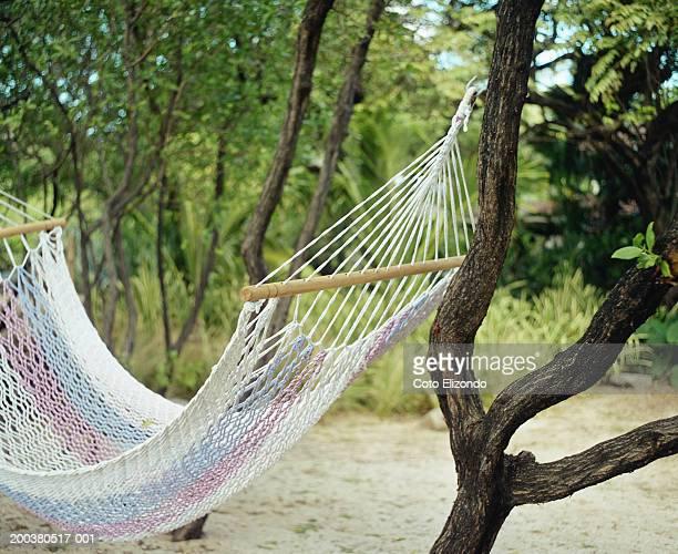 hammock suspended from trees at beach - playa tamarindo fotografías e imágenes de stock