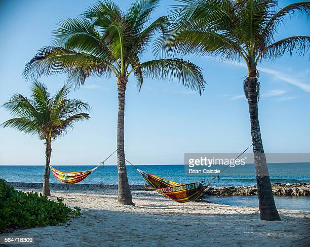 Hammocks tied to palm trees on beach against sky