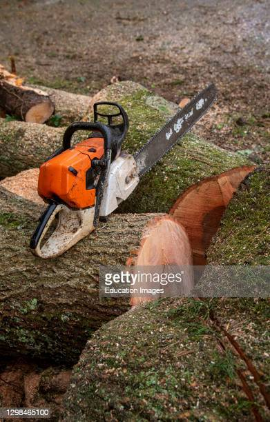 Hampshire, England, UK, Chain saw resting on cut timber of an Ash tree.