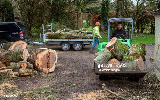Hampshire, England, UK, Forestry workers moving sections of an Ash tree with a small tractor and grab.