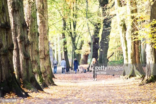 Hampstead Heath London, in Autumn