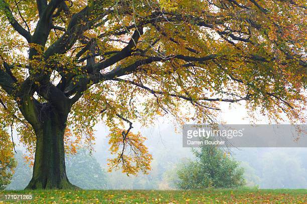 hampstead heath - hampstead heath stock pictures, royalty-free photos & images
