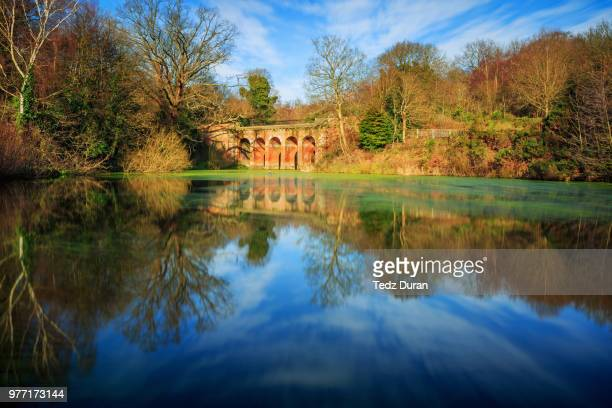 hampstead heath pond in london, england. - hampstead heath stock pictures, royalty-free photos & images