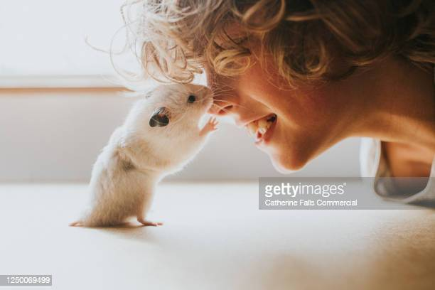 hamster and boy rubbing noses - pets stock pictures, royalty-free photos & images