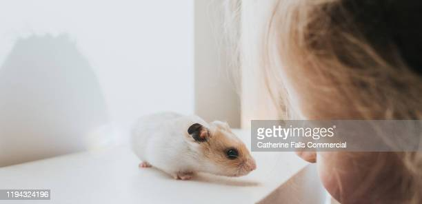 hamster and his young owner - rodent stock pictures, royalty-free photos & images