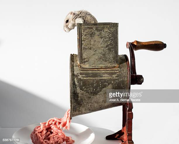 Hamster caught in a crushing machine of meat