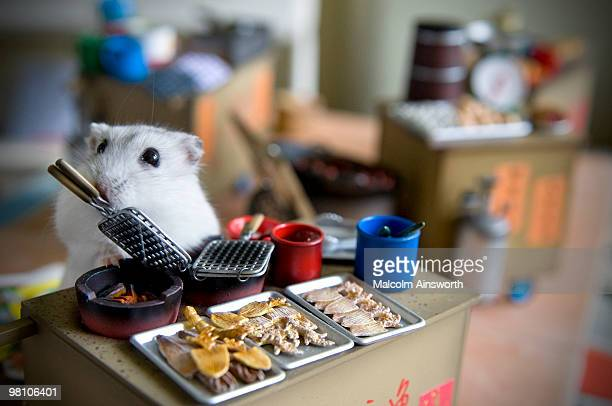 Hamster Cooking on a model Da Pai Dong