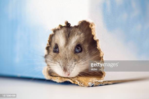 Hamster Finding The Exit