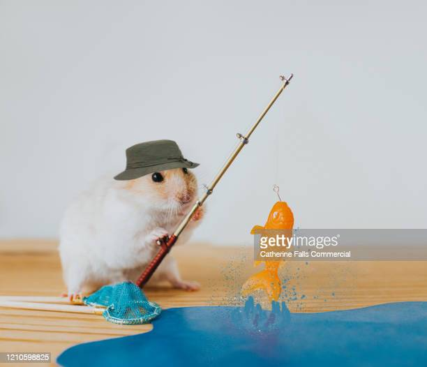 hamster fishing - pets stock pictures, royalty-free photos & images
