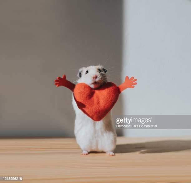 hamster hug - danke stock-fotos und bilder