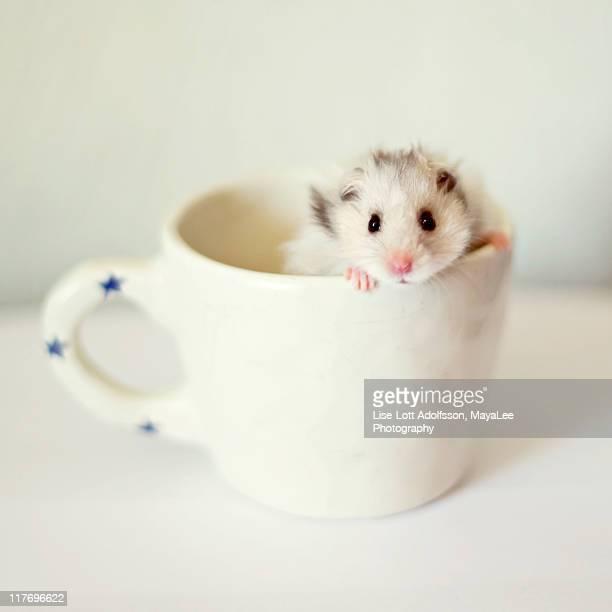 Hamster in coffee mug