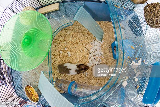 hamster in his cage - hamster photos et images de collection