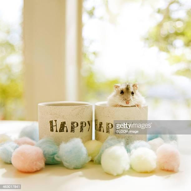 Hamster In Mug