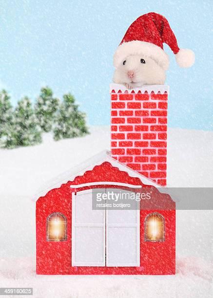 hamster in Santa Claus house