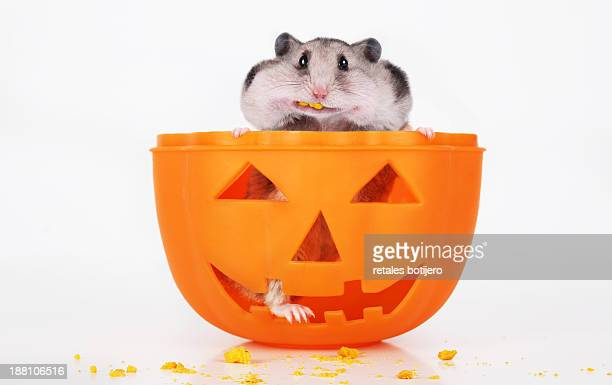 hamster on halloween - hamster photos et images de collection