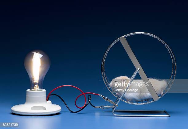 Hamster on wheel powering light bulb