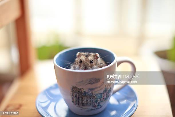 hamster - inside out stock pictures, royalty-free photos & images