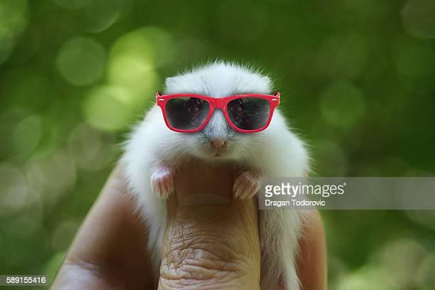 hamster - hamster imagens e fotografias de stock