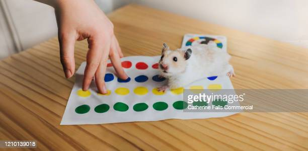 hamster playing dot game - funny animals stock pictures, royalty-free photos & images