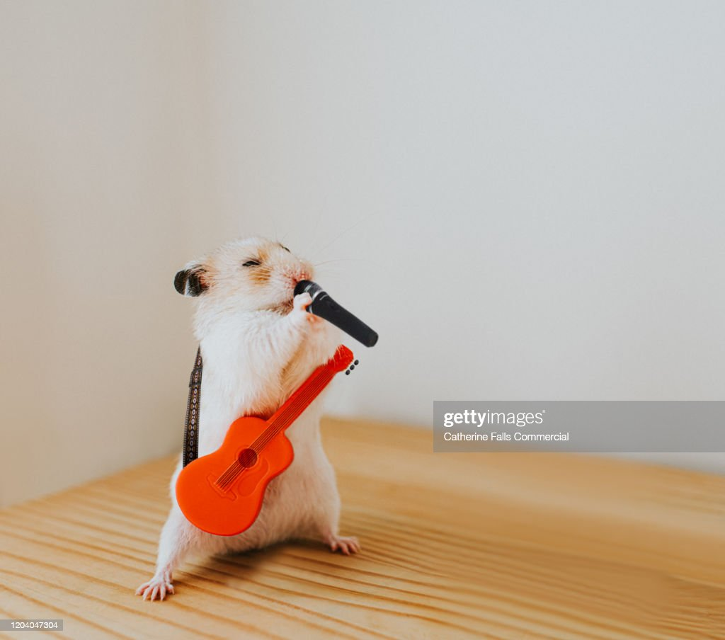 Hamster Rocking Out : Stock Photo