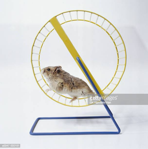 Hamster Running in Wheel