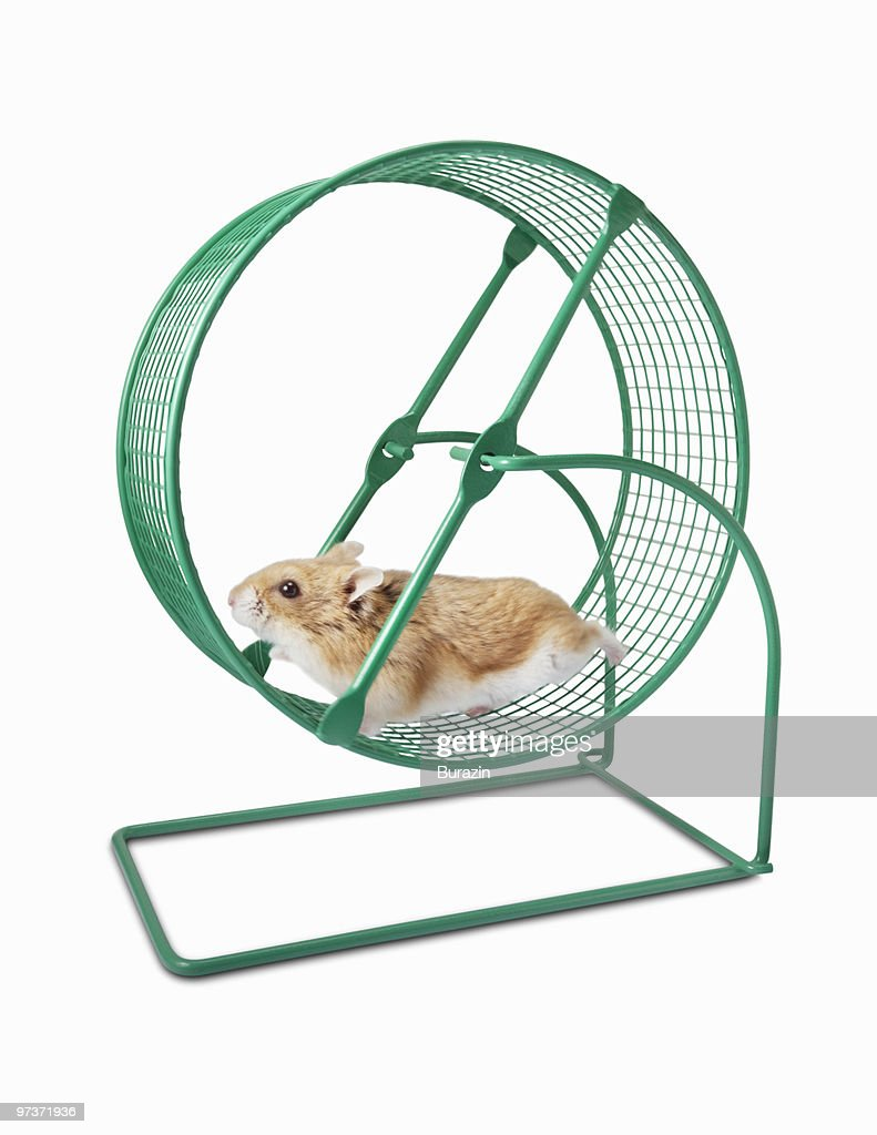 popular Hamster Wheel