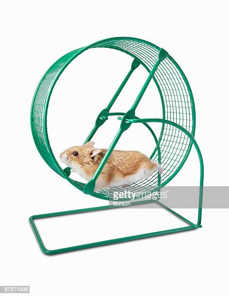 Hamster running on a Hamster Wheel