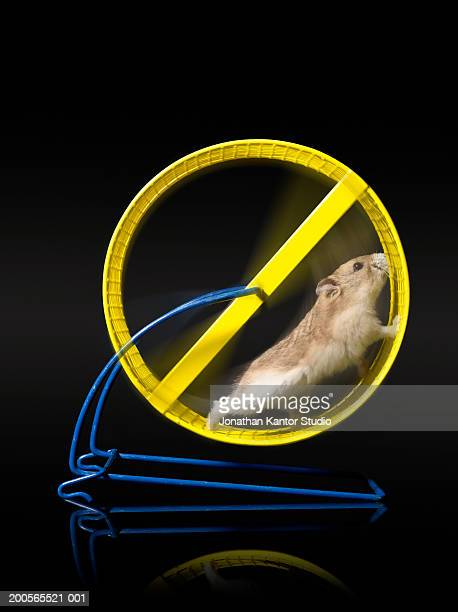 Hamster running on wheel against black background