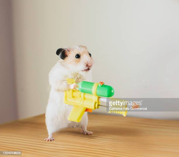 hamster with a watergun - aiming stock pictures, royalty-free photos & images