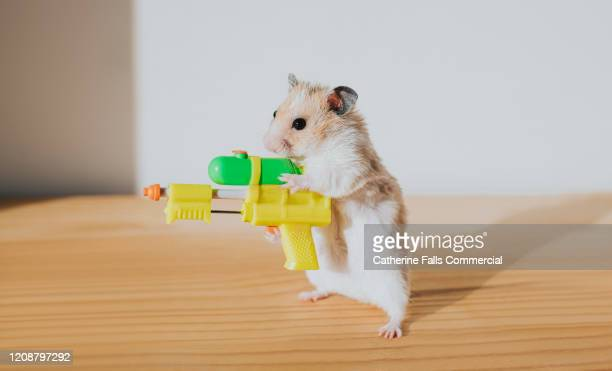 hamster with a watergun - wet stock pictures, royalty-free photos & images