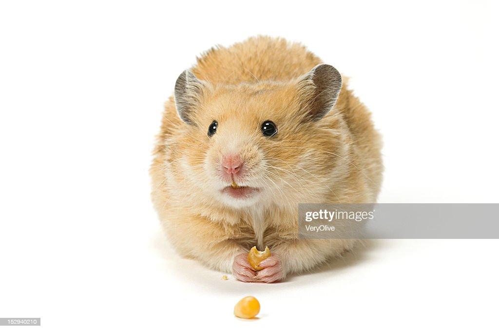 Free hamster com