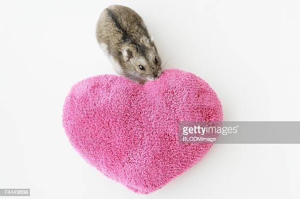 Hamsters and cushion of heart shape