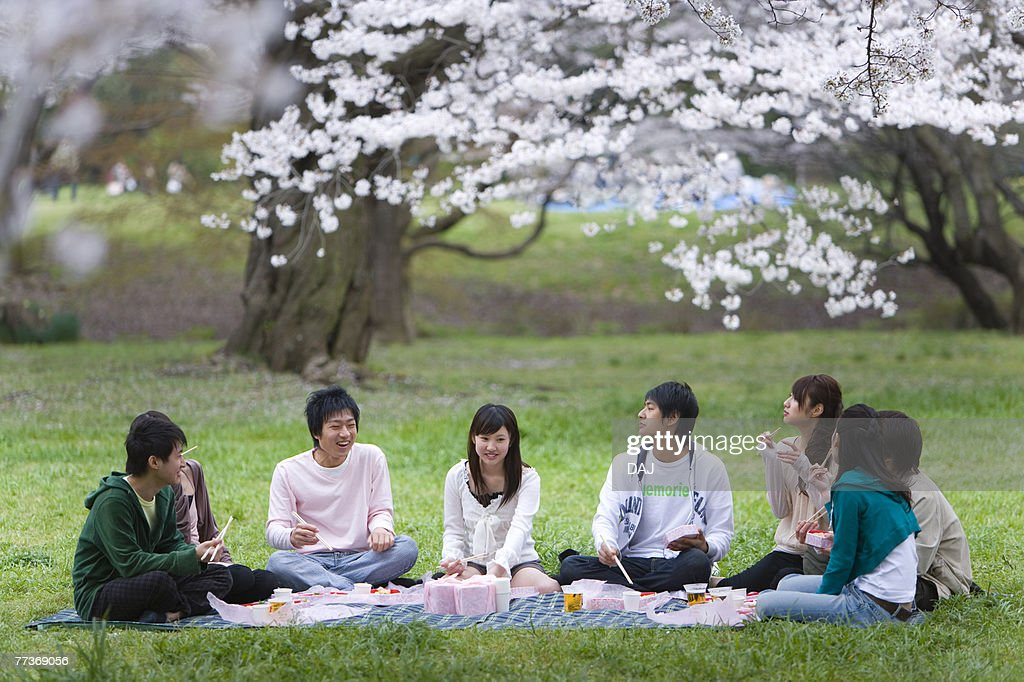 Hanami Under Full-bloomed Cherry Blossoms, Differential Focus,  : Photo
