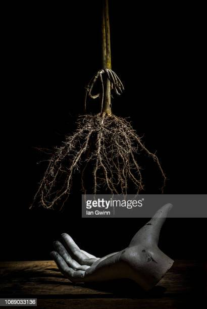 hand and roots - ian gwinn stock photos and pictures