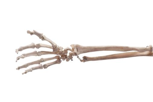 Hand bone 157530254