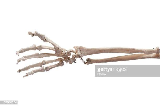 hand bone - human skeleton stock photos and pictures