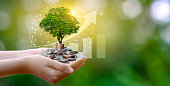 hand Coin tree The tree grows on the pile. Saving money for the future. Investment Ideas and Business Growth. Green background with bokeh sun