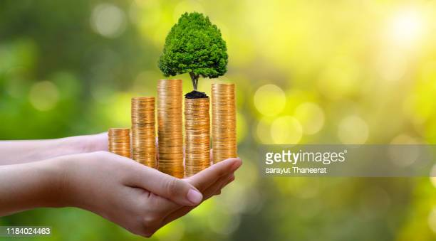 hand coin tree the tree grows on the pile. saving money for the future. investment ideas and business growth. green background with bokeh sun - shareholder stock pictures, royalty-free photos & images