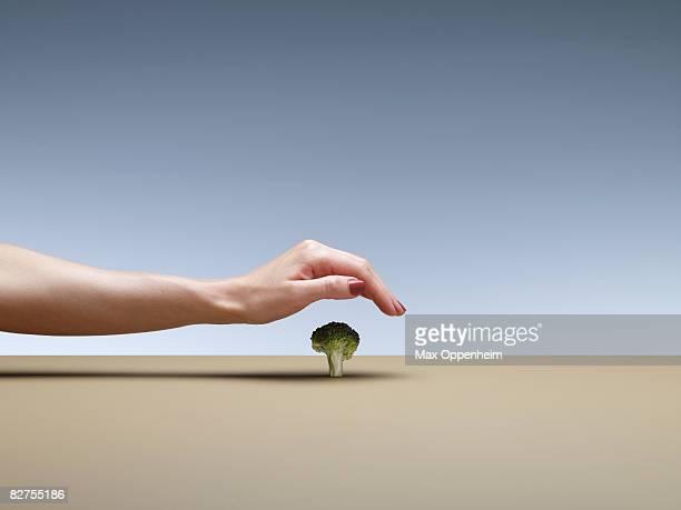 hand covering a single brocolli floret