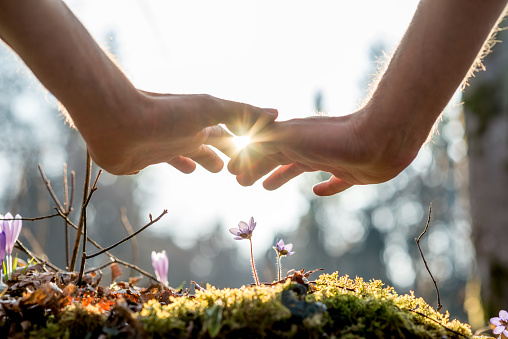 Hand Covering Flowers at the Garden with Sunlight 492623216