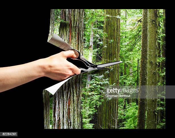 hand cutting photograph of forest with scissors - animal extinto fotografías e imágenes de stock