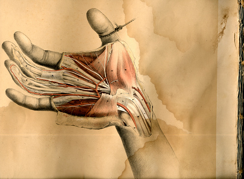 Hand dissection drawing 471008761