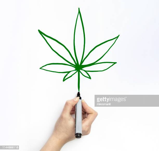 hand drawing marijuana on white page with marker - カンナビスサティバ ストックフォトと画像