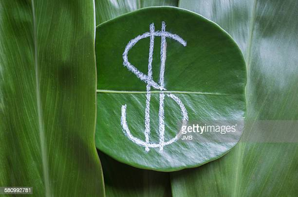Hand drawn dollar sign on a leaf