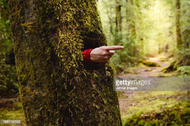 hand emerging from hole in tree trunk - durability stock photos and pictures