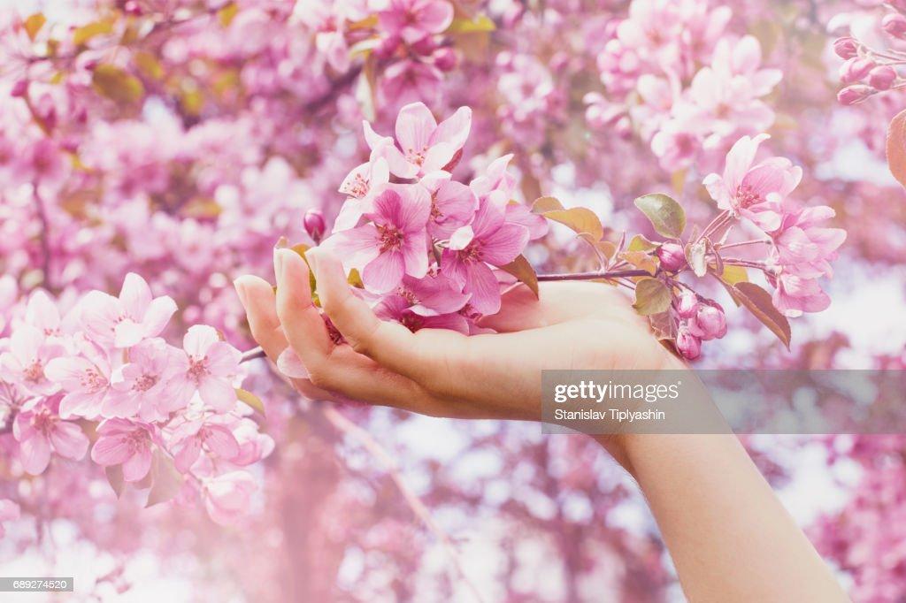 Hand examining flowers in trees : Stock Photo
